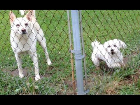 Dog Aggression - Fence Aggression