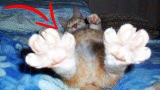 Top 10 Weird CAT BEHAVIORS Explained