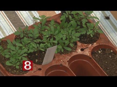 Morning Glory Gardens: Seed Starting Made Easy