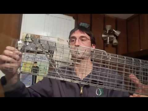 Squirrel Removal From Attics Cleveland, Ohio