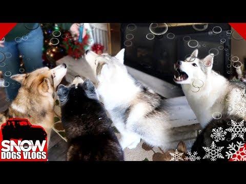 Dogs Love Bubbles | Can we Freeze Bubbles ?