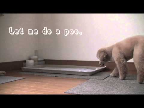 Dog Training 6