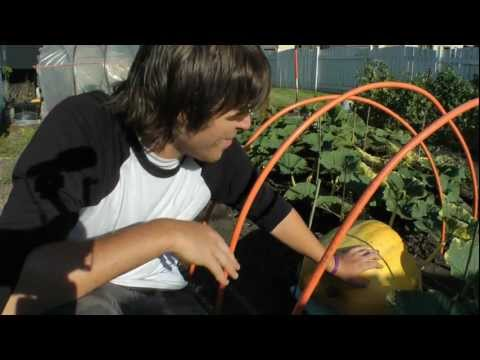 How To Hydroponics - S02E27 Hydroponic Giant Pumpkin Part 06