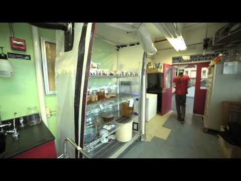Kombucha Brooklyn: SCOBY Farming