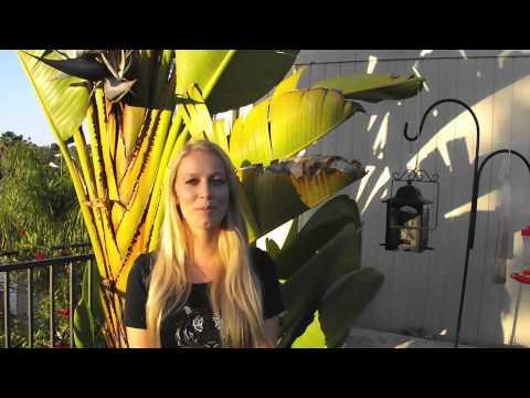 Exotic Animal Trade - Dangers and Awareness