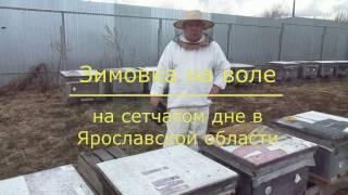 Зимовка на воле на сетчатом дне в Ярославской области