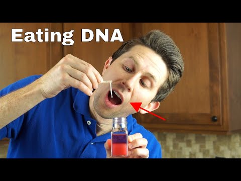 Is it Dangerous To Eat Pure DNA? Extracting and Eating Pure DNA
