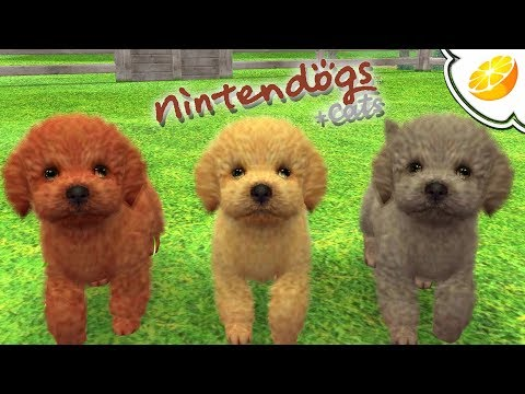 Citra Emulator Canary 451 | Nintendogs + Cats: Toy Poodle & New Friends (GPU Shaders) | Nintendo 3DS