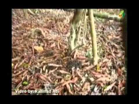 Berburu burung langka..asiiik!!!!!