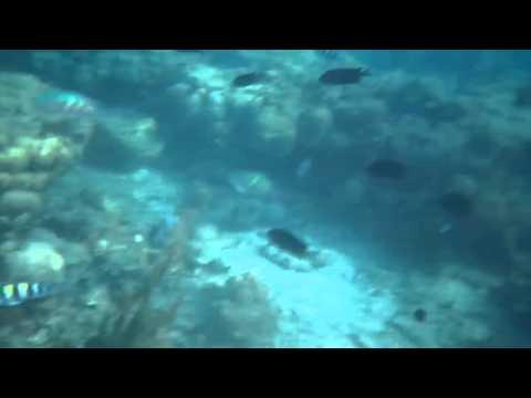 Snorkeling at Pandan Island in Puerto Pricesa Palawan Apr 6, 2015