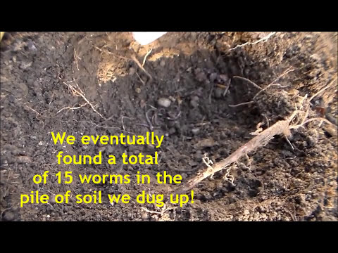 How to Test Your Soil without a Kit or Equipment!
