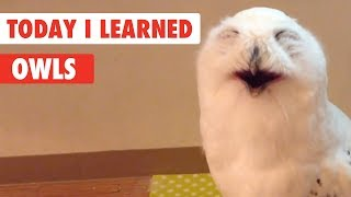 Today I Learned   Owls Facts