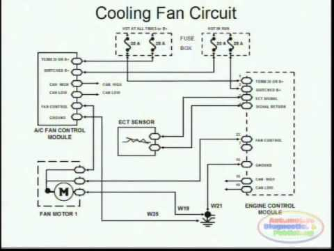 Cooling Fans & Wiring Diagram