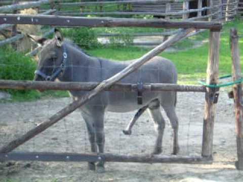 Xxx Mp4 Horny Donkey 3gp Sex