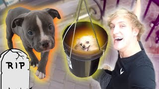 100-FOOT PUPPY ZIP LINE! **Rip Arya**