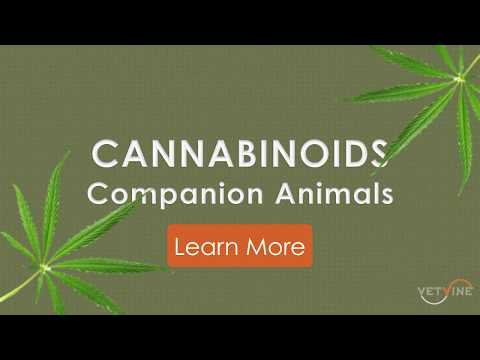 Pot for Pets? Marijuana is a no-no, but hemp and CBD is another story