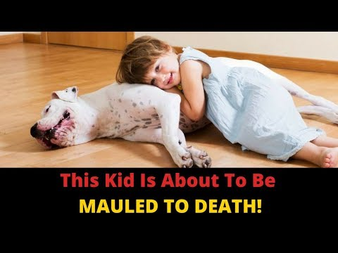 Why Do Dogs Bite Children? Parents, You Can Prevent Dog Attacks In Kids!