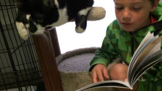 Lucas and Sesame- Tales for Tails