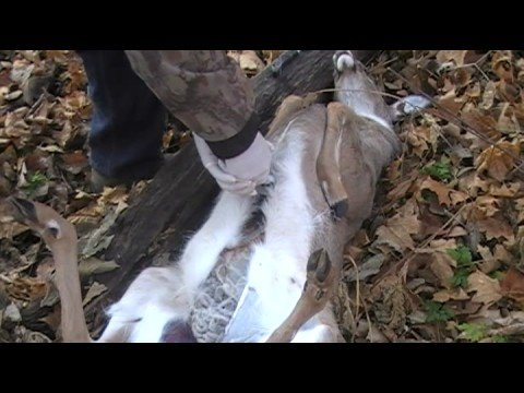 Field Dressing Large Game Deer