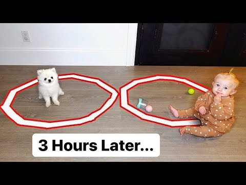 8 Month Old Baby Posie vs Tiny Puppy - Hilarious Last To Leave The Circle Challenge