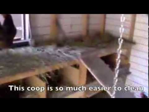 Convert Existing Shed into Chicken Coop for Low Cost