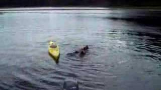 What not to do when you fall out of a kayak