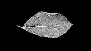 ANESTHESIA | Dark Piano Guitar Trap Beat | Deep Melodic