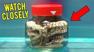 Look What Happens to the Octopus Locked in a Jar. Genius Animals