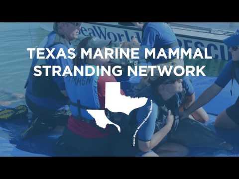 SeaWorld Announces Partnership with the Texas Marine Mammal Stranding Network   SeaWorld®