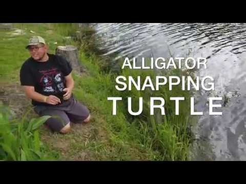 Man Comes Face to Face with Alligator Snapper!!!