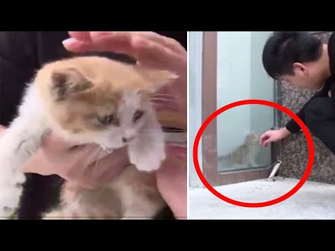 Cat rescued after trapped behind glass wall for 3 days; kitten freed from glass jar - Compilation