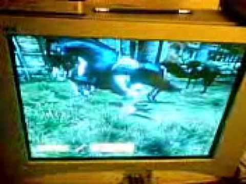 Horses Having Fun