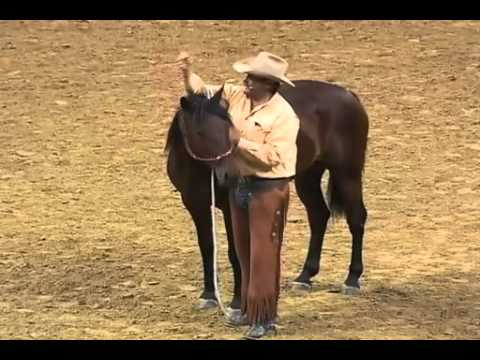 Parelli Natural Horse Training Tip - How to Halter a Horse