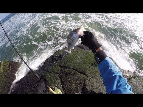 Fly Fishing the Cold December Surf For Striped Bass