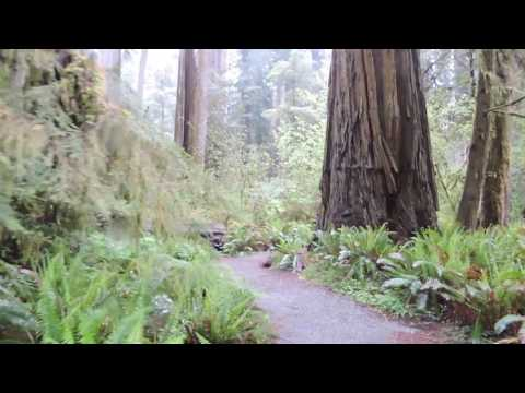 Redwood National Park, May 2017