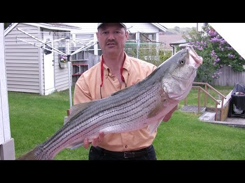 How to Clean a Striper - Easy Way to Fillet a Striped Bass