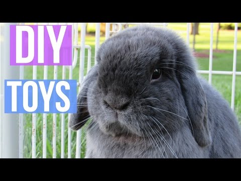 DIY RABBIT TOYS || Easy and Free Rabbit Boredom Breakers! LovableLop