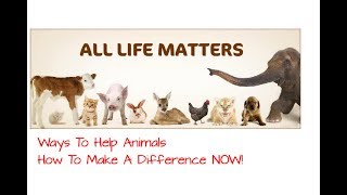 Ways To Help Animals, How to Make a Difference NOW!, Animal Activisim and Cruelty Free Makeup