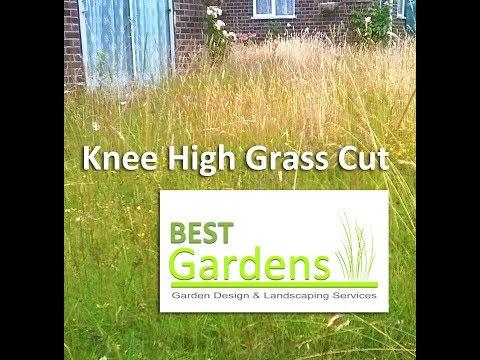 Knee High Grass Cut