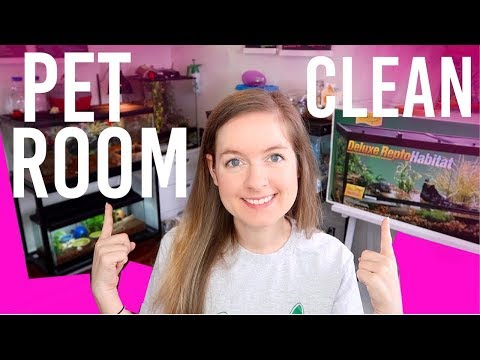 HUGE Pet Room Clean & Moving All Of My Tanks