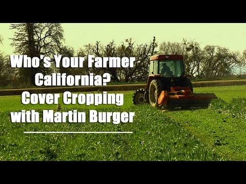 Who's Your Farmer California? Cover Cropping with Martin Burger