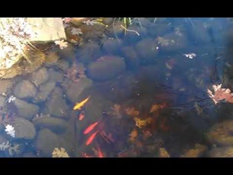 Garden fish pond during winter