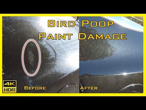 Bird Poop Paint Damage