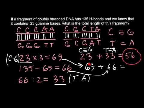How to find the length of DNA fragment?