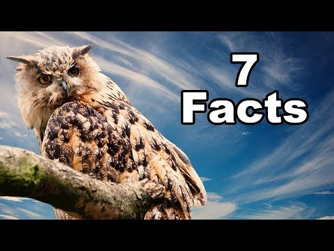 7 Facts about the Owl