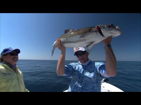 Monster Cobia Fishing Florida on the Space Coast
