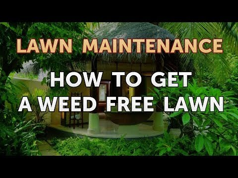 How to Get a Weed Free Lawn