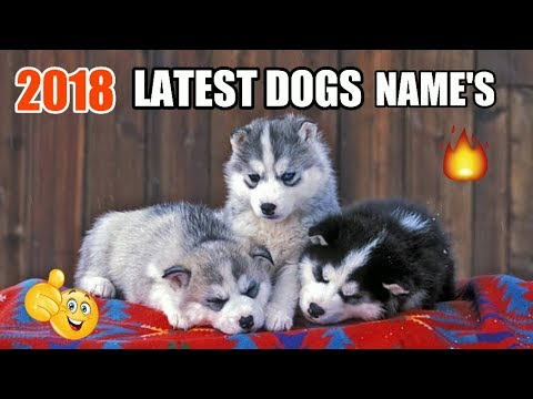 Top Dog Names | Top 20 Dogs names 2018 | New Dog Name Male & Female