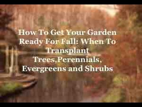 How To Get Your Garden Ready For Fall: When To Transplant Trees,Perennials, Evergreens and Shrubs