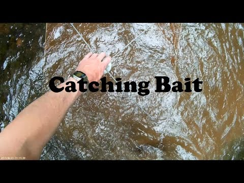 Catching Bait